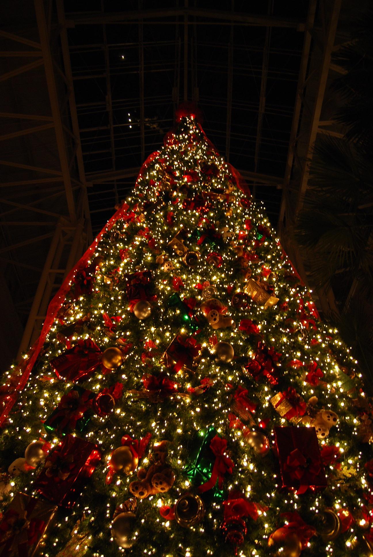 Giant christmas tree inside dores vanderbilt university