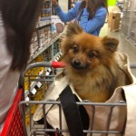 I took Estelle with me to Lowe's when I went with my mom and aunt to pick up a few things for the house at Lowe's.