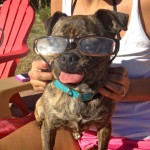 Betty and I did some more sunbathing on Saturday.  She wanted to try on my mom's reading glasses.