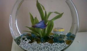 Barnie the Fish