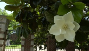 Photo by Neil Brake/Vanderbilt
