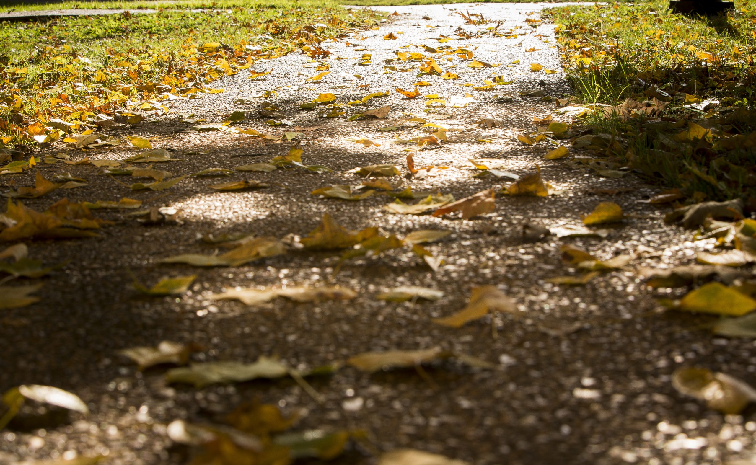 leaves on a pathway